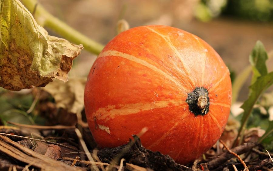 Slow Cooker Fall Dump Cake Recipes a Pumpkin Growing