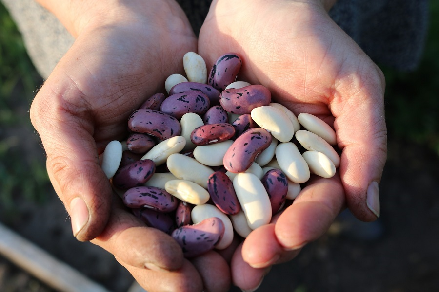 Instant Pot Tips for Cooking Beans Person Holding Beans in Cupped Hands