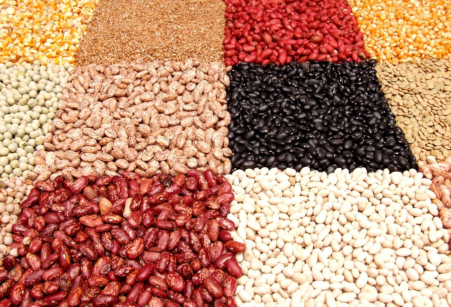Instant Pot Tips for Cooking Beans Assorted Beans Divided into Squares Based on Type
