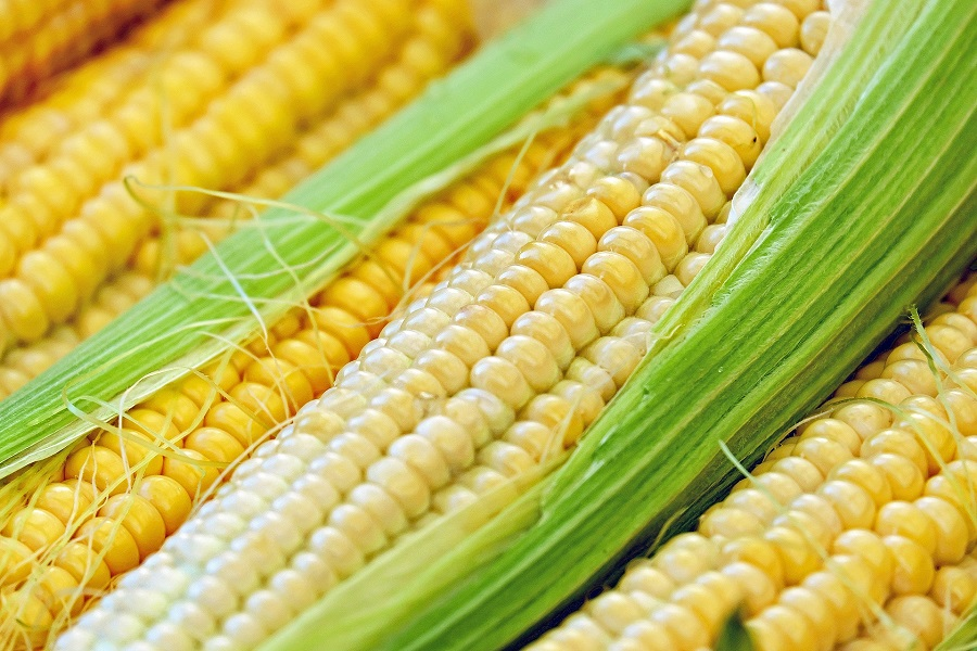 Crockpot Corn on the Cob Recipes Close Up of Corn on the Cobs